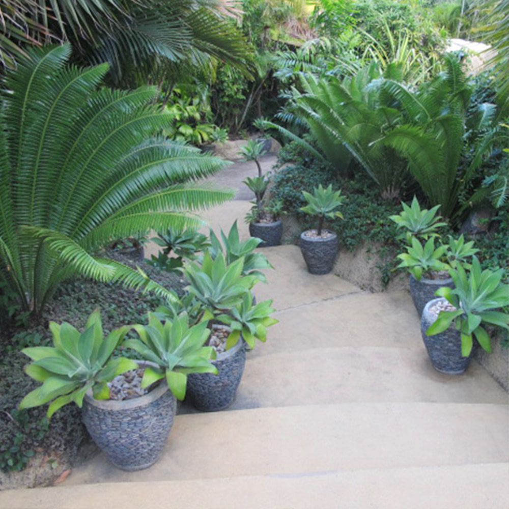 Pathway through Fernery at Villa Botanica
